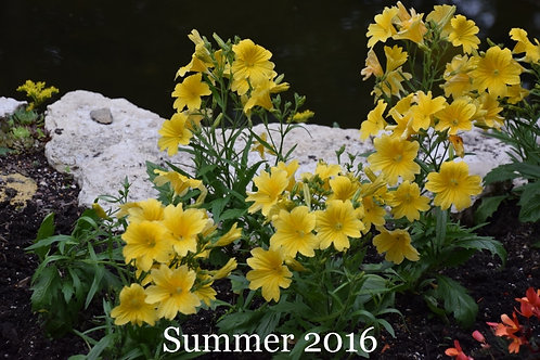 Flowers of Summer 2016.5