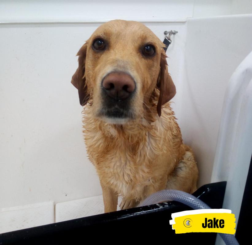 Meet Jake 💛