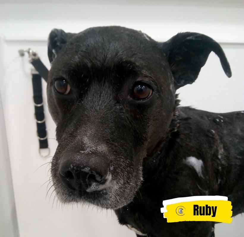 Meet Ruby 💛