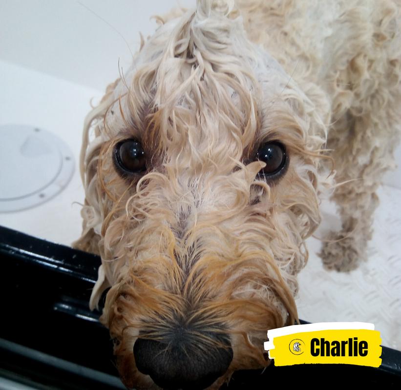 Meet Charlie 💛