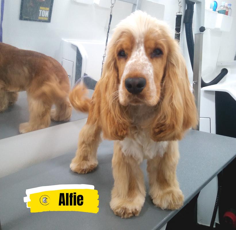 Meet Alfie 💛