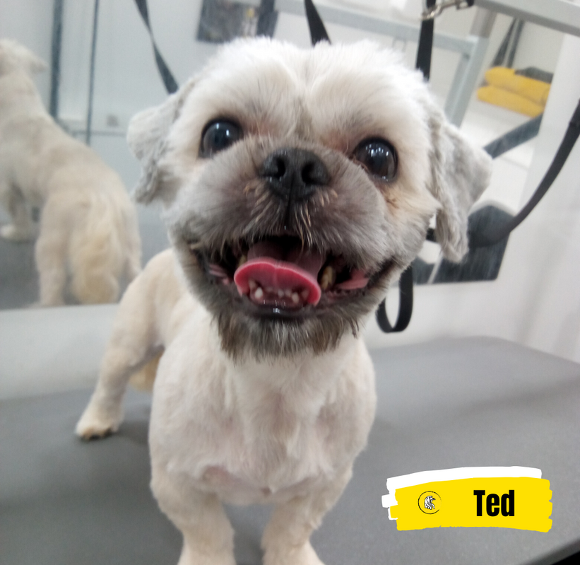 Meet Ted 💛