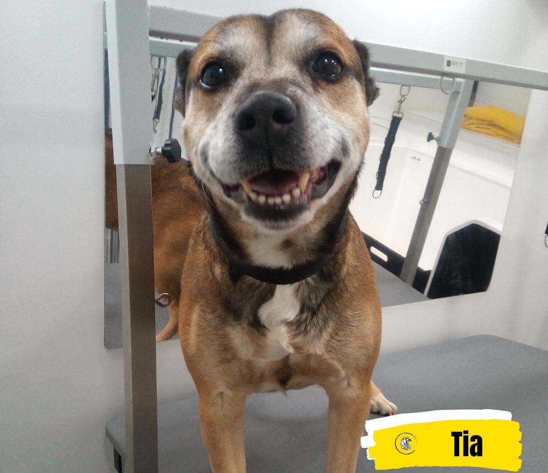 Meet Tia 💛