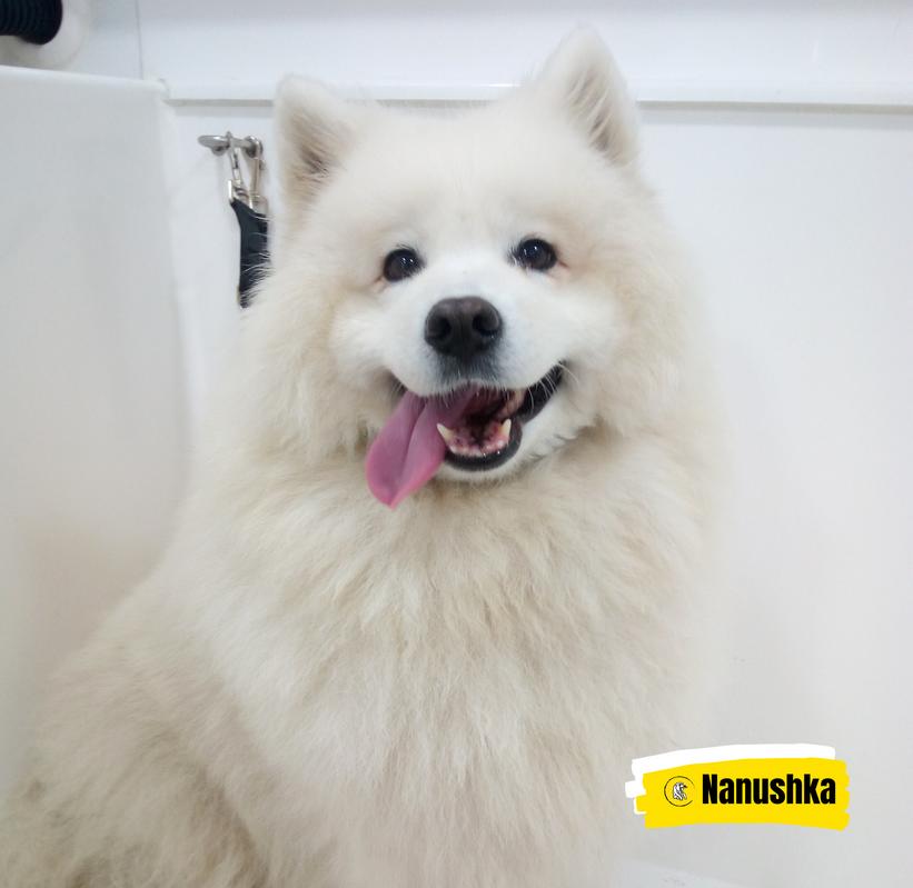 Meet Nanushka 💛