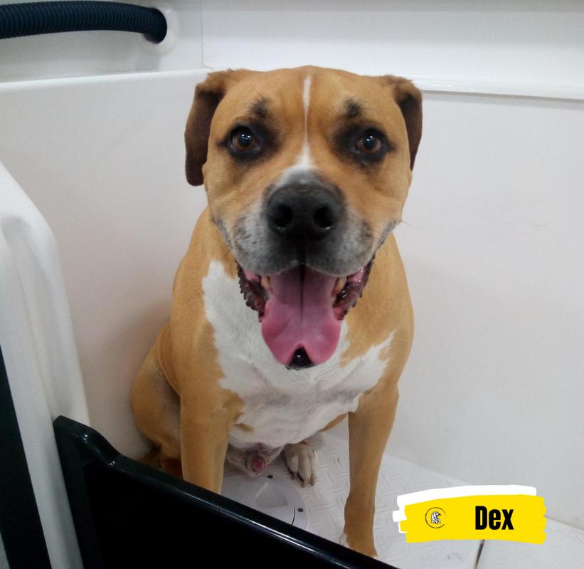Meet Dex 💛