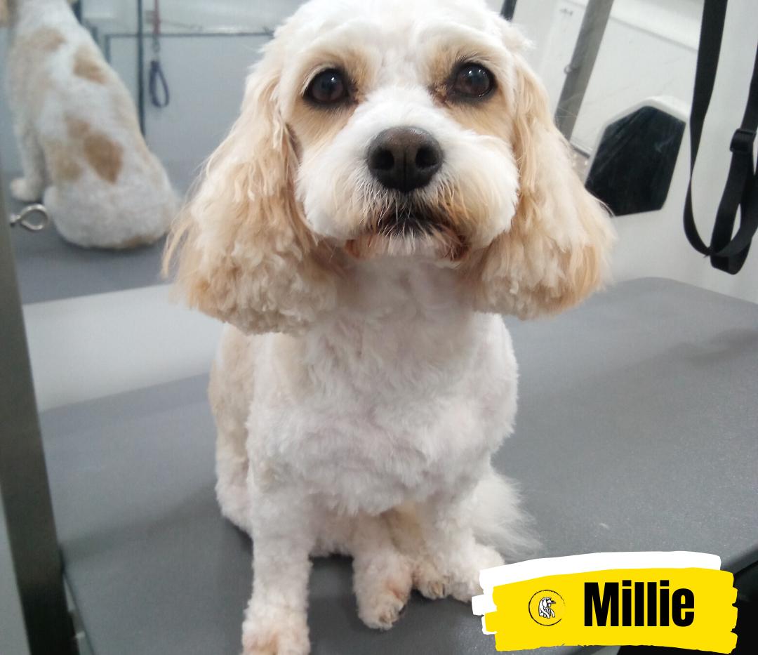 Meet Millie 💛