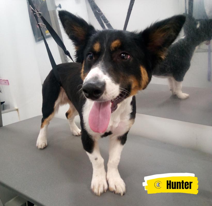 Meet Hunter 💛