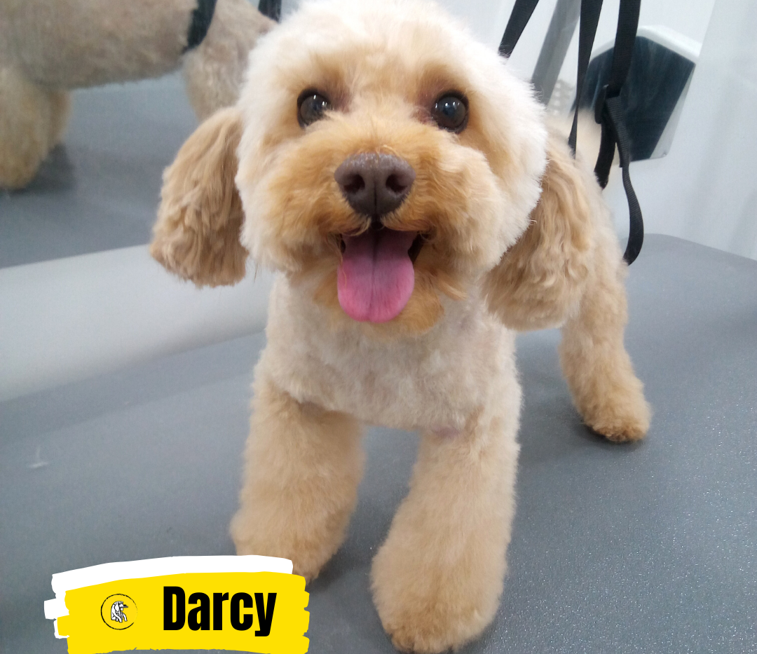 Meet Darcy 💛