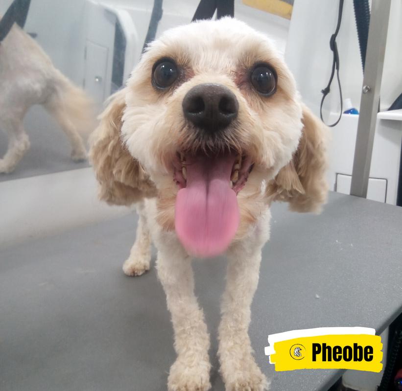 Meet Pheobe 💛