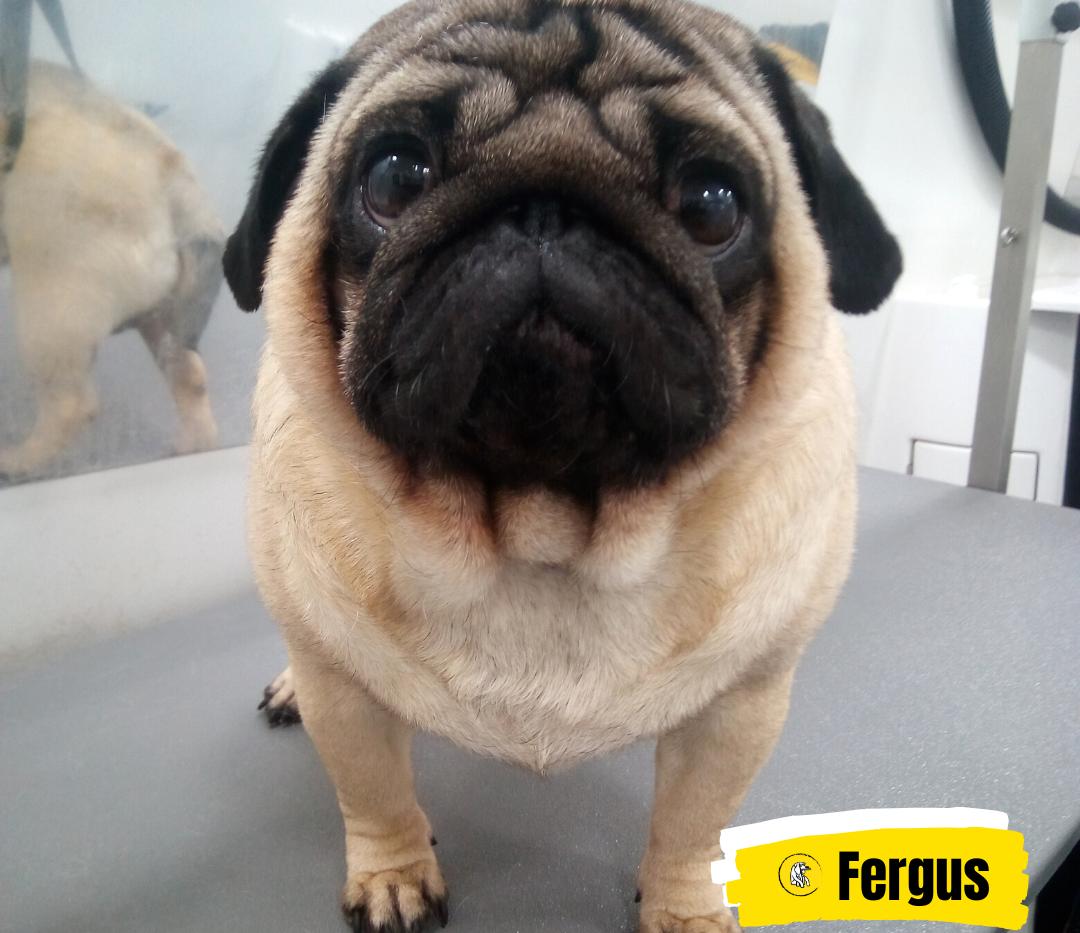 Meet Fergus 💛