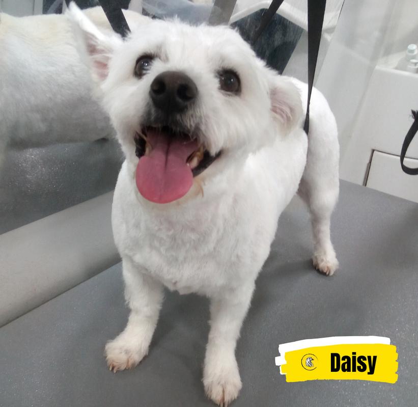 Meet Daisy 💛