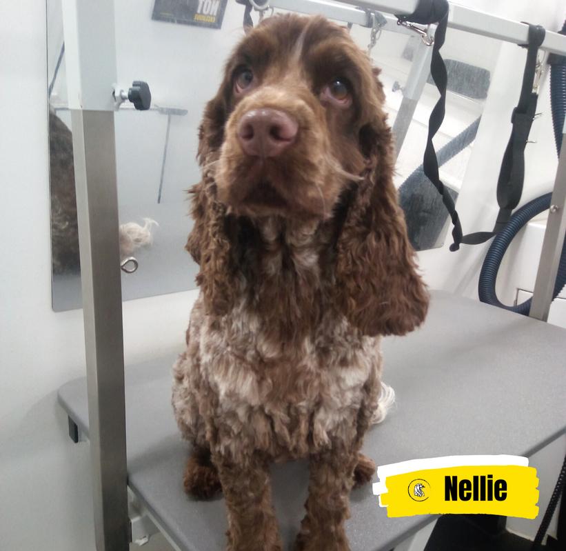 Meet Nellie 💛
