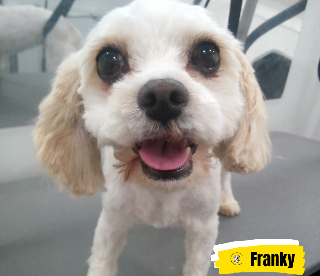Meet Franky 💛