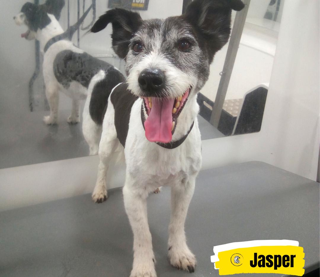 Meet Jasper 💛