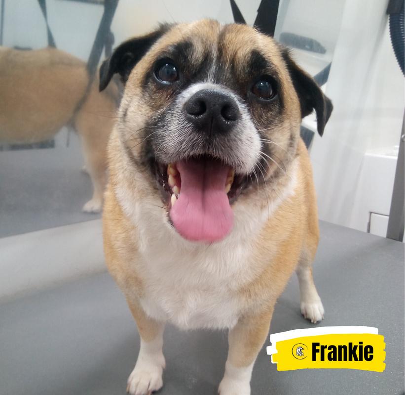 Meet Frankie 💛
