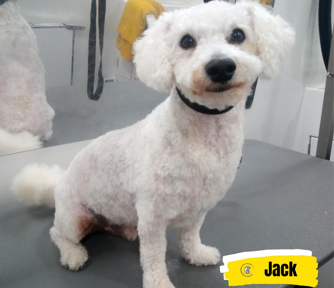 Meet Jack 💛