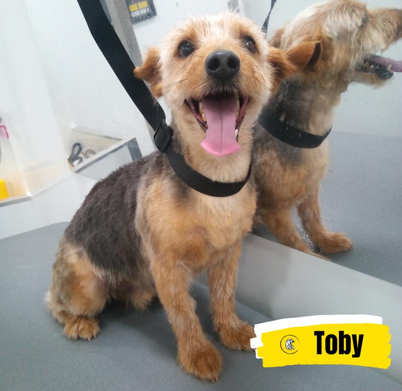 Meet Toby 💛