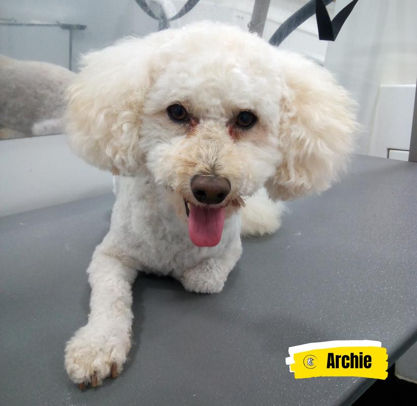 Meet Archie 💛