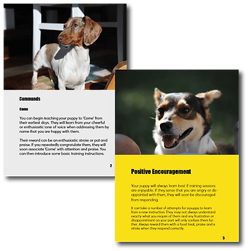 Puppy Training Guide Promo Image-min.png