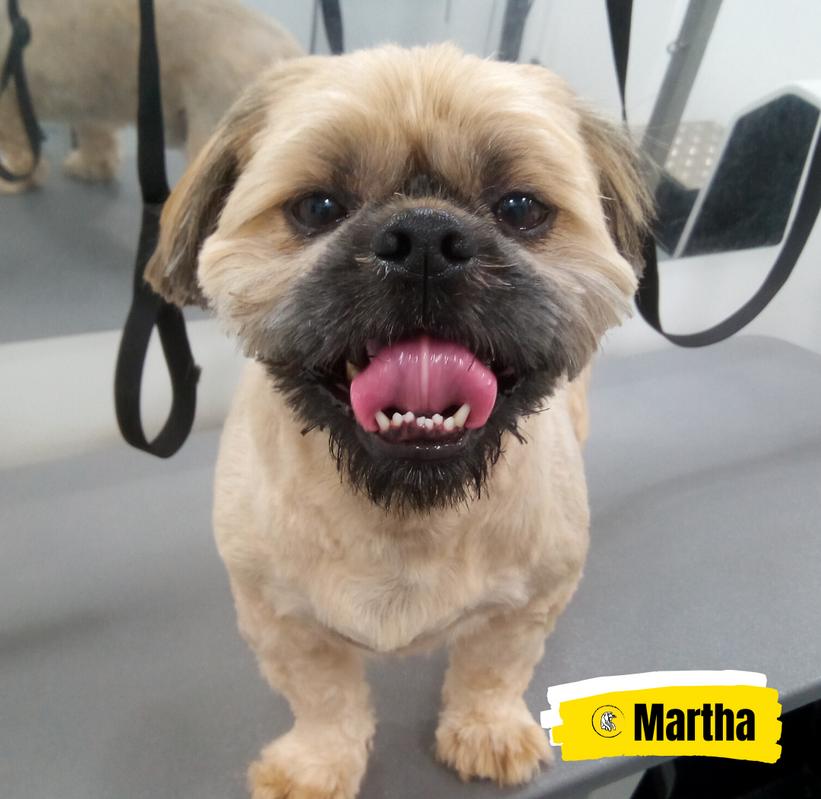 Meet Martha 💛