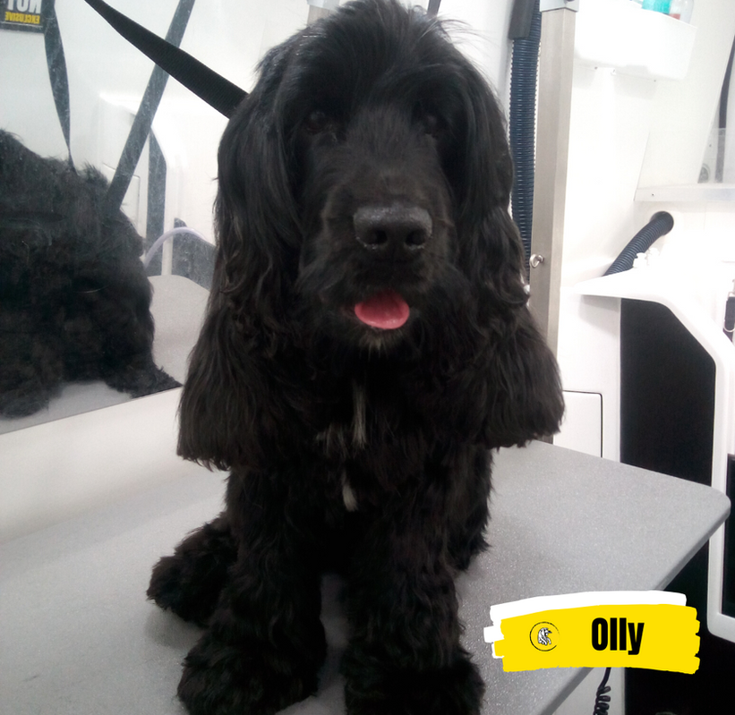 Meet Olly 💛