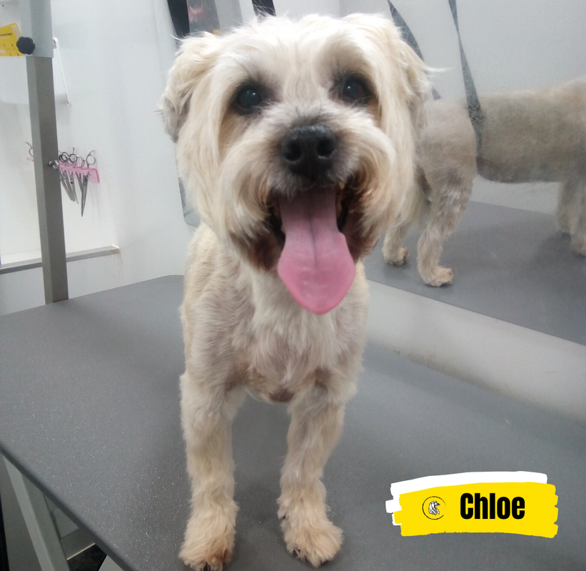 Meet Chloe 💛