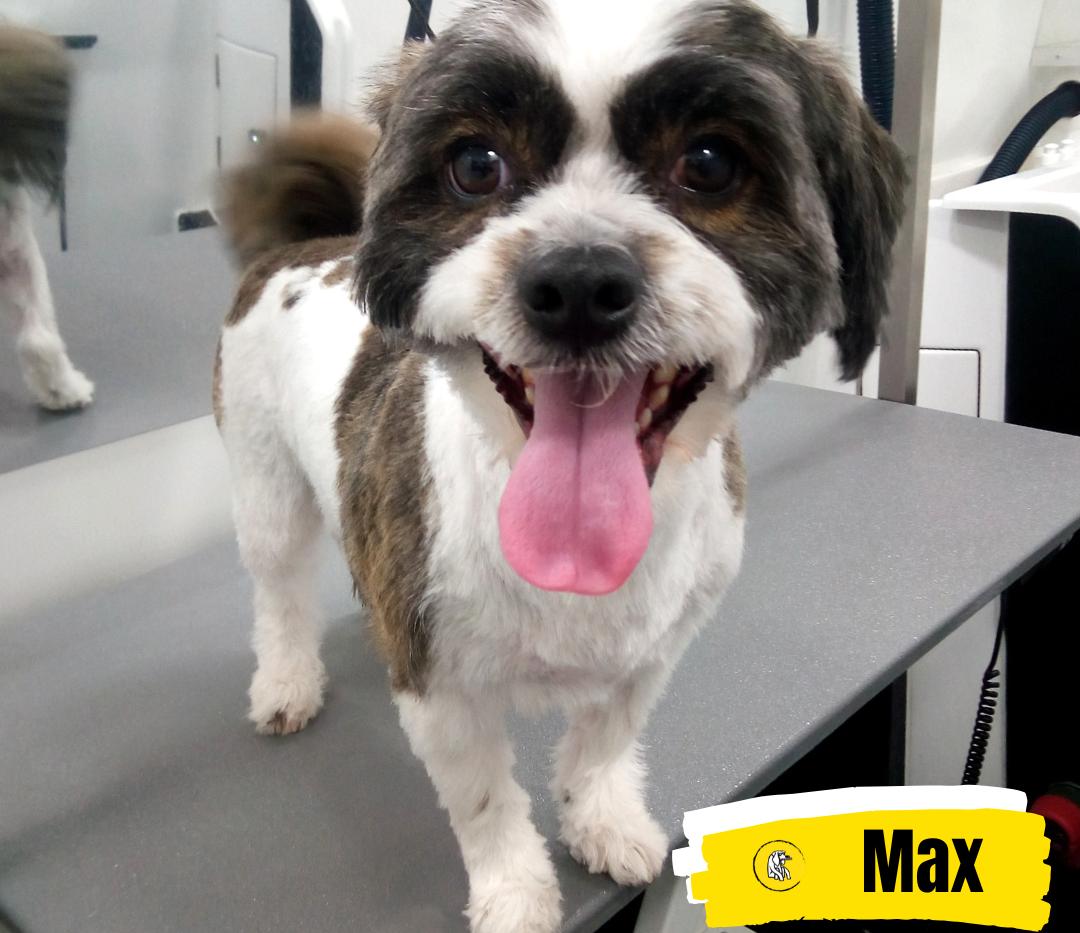 Meet Max 💛