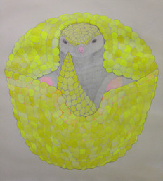 Armadillo (De la serie Extrange animals)