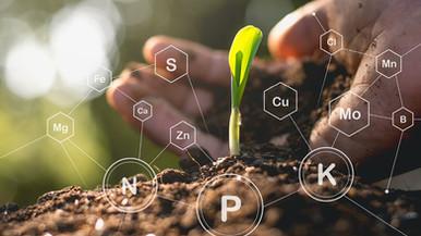 Understanding Phosphorus