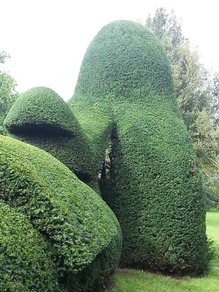 Hedge Trimmimg Malvern
