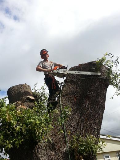 KW Boulton Tree Removal