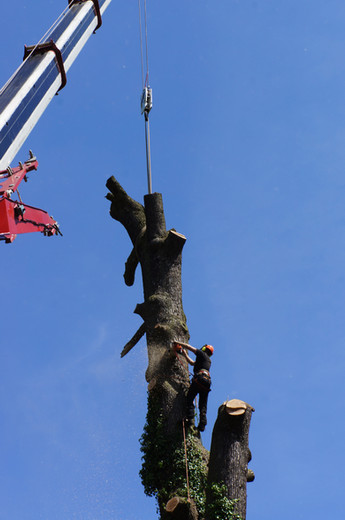 Extreme Height Tree Work