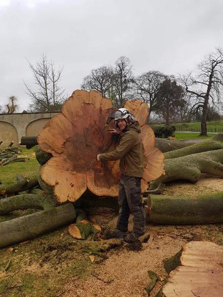 Tree Felling KW Boulton
