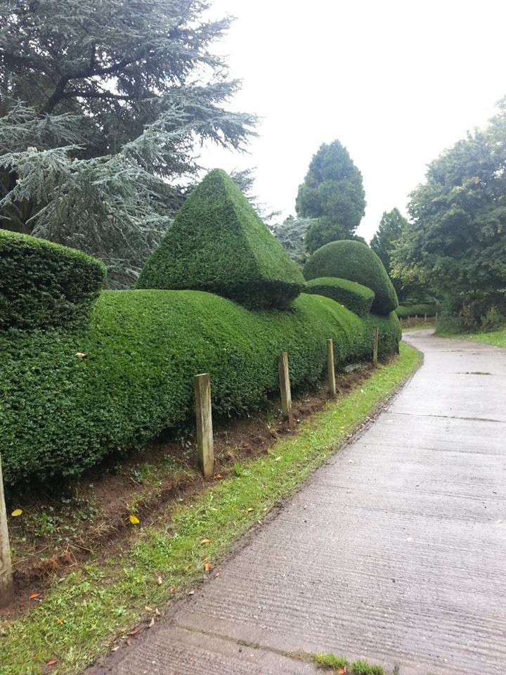 Hedge Trimming Malvern