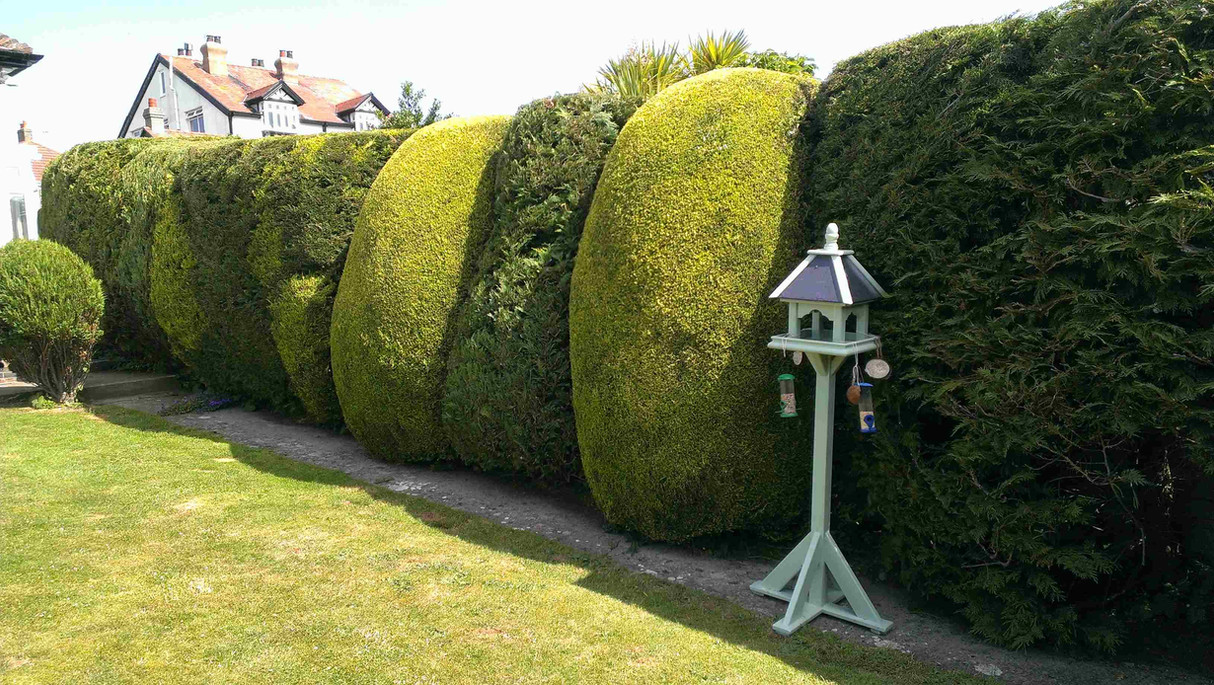 hedge shaping