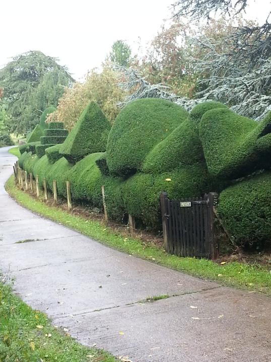 KW Boulton Hedge Trimming