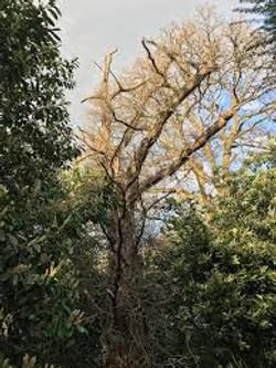 Deadwooding Trees