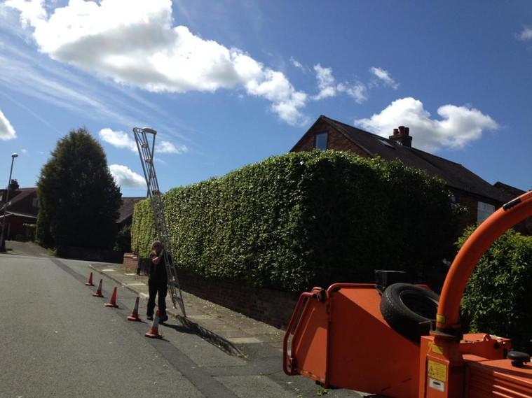 hedge trimming KW Boulton