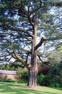 tree work 7.jpg