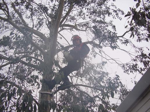up tree