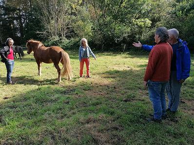 opstellignen tussen de paarden 2.jpg