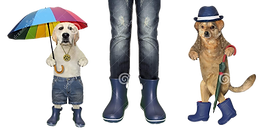 two-dogs-umbrellas-near-girl-two-dogs-bl
