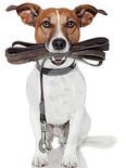 dog with leash.jpg