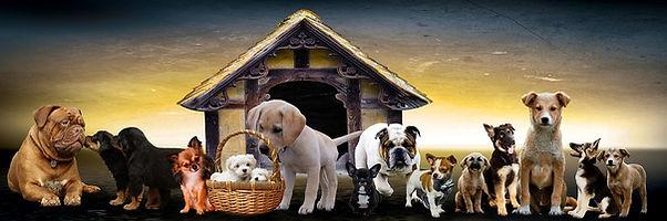 animals-3017138_960_720.jpg