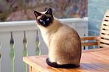 cat-2068462_960_720.webp
