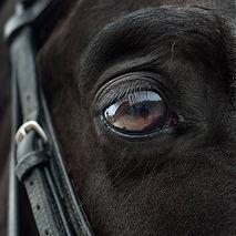 horse-2112196_960_720.jpg