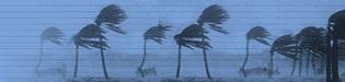 hurricane trees.jpg