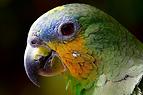 parrot-2756488_960_720.webp