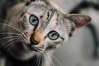 cat-face-1081951_960_720.jpg