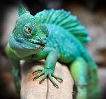 reptile-2042906_960_720_edited.jpg
